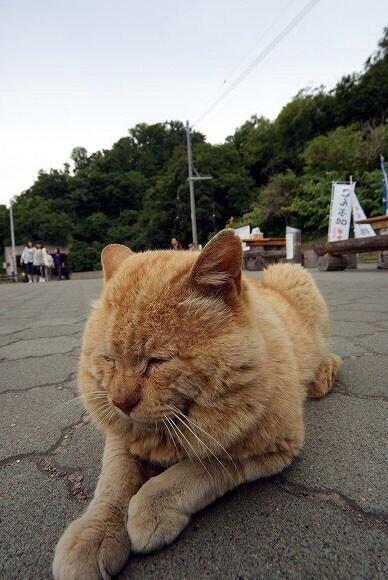 【 可愛かったらRT♪ 】   トラのようなネコ (=^ェ^=) http://t.co/RwNCyy0k61