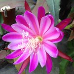 Like the flower that blooms with proper nurturing, such is one's talent. Live up to your potential & c what follows..