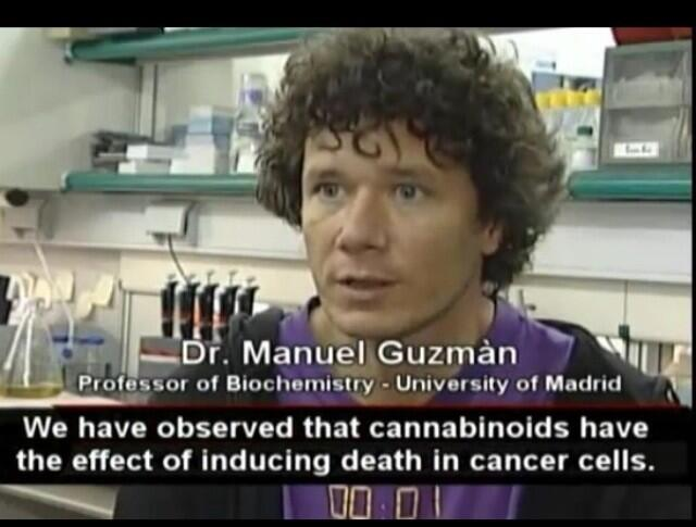 http://t.co/diqUAGEA8F If youre too bashful to tell people that #cannabis kills #cancer, then youre not an activist. Youre a halfass.