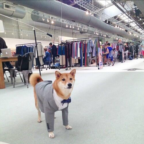 RT @DogSolutions: noone look betar than a well dress dog, suitdog, so well http://t.co/aDhOHZOIyR