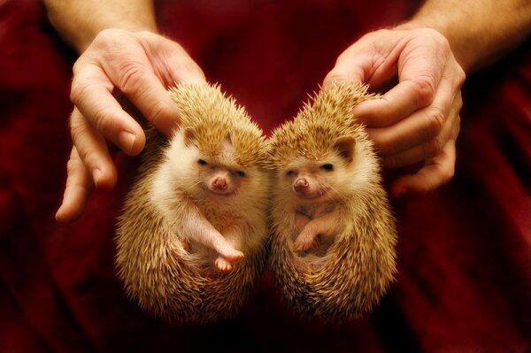 手がかわいい http://t.co/BRcu7MbdlE