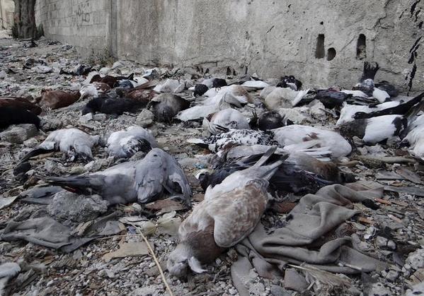 NAVER まとめシリア、内戦の中のねこたち