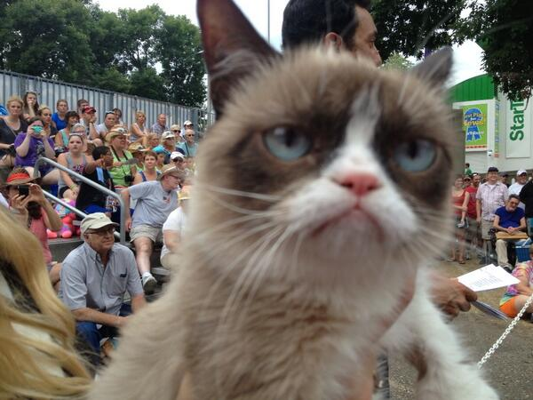jamieyuccas (@jamieyuccas): And now I just met Grumpy Cat?! Best day at @mnstatefair with @wcco at 4 pm! http://t.co/zHh0v7IxeW
