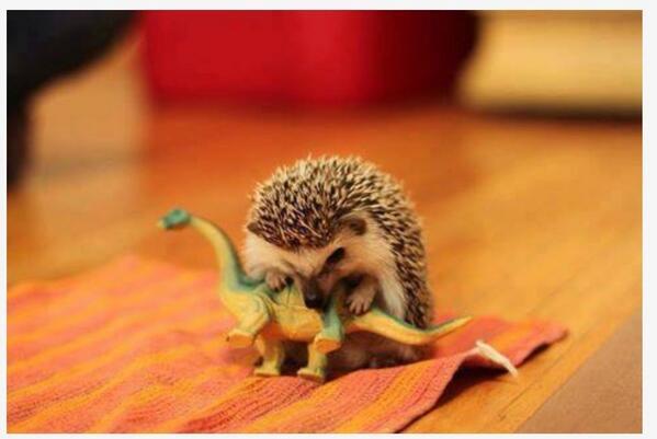 Et voici le troisième et dernier nominé pour la photo la plus #cute du jour. Qui l'emportera en RT ? http://t.co/85jMQ3Qdga