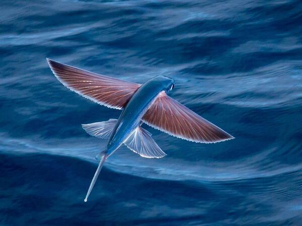 Flying fish http://t.co/sNEcZN0WYh