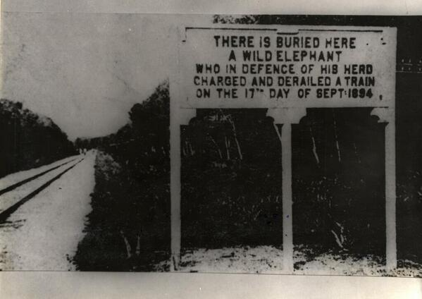 RT @HistoryInPics: An elephant derailed a train while defending his herd in Malaysia, causing 2 deaths, 1894. http://t.co/oMmsf0GVaa