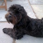 He's a little hero. Woodbury common, near Lympstone Devon. #findmousse http://t.co/egTO94S6bS