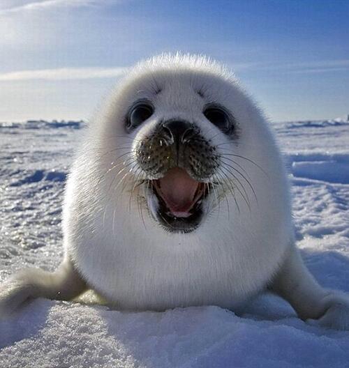 Coucou. Tu veux voir ma moustache ? http://t.co/IkzUZwQM6Y
