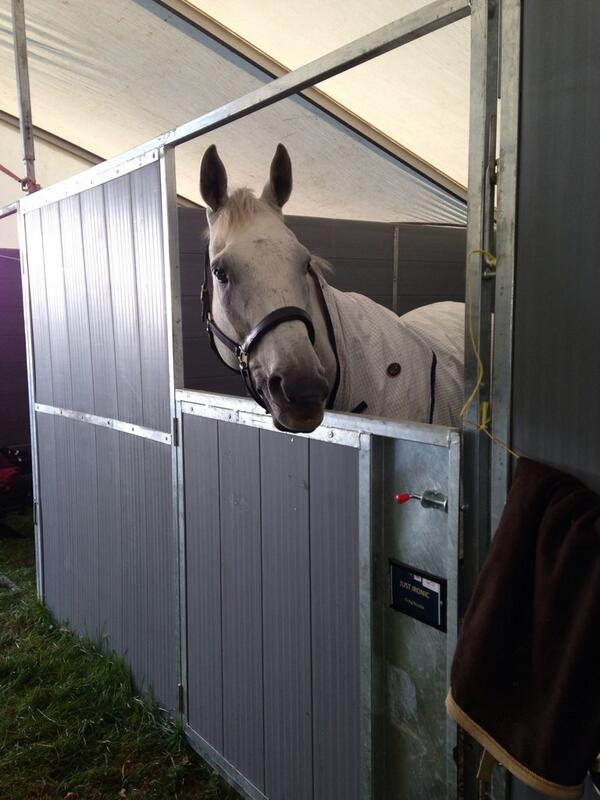 Spida looking well, eye all healed #absolutelygutted #Burghley #eventing #Burghley2013 http://t.co/5GQbwoCqrx