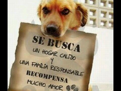 Adpta una mascota y seras feliz con el amor q ella te dara.@RefugioHalley 02614181111 @7PetalosMcbo @Porla_PazAnimal http://t.co/xlm3p2kjxT