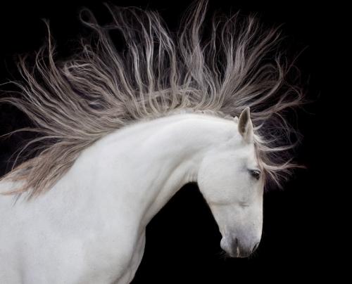 Art Wolfe http://t.co/8Jiq0MhCvM