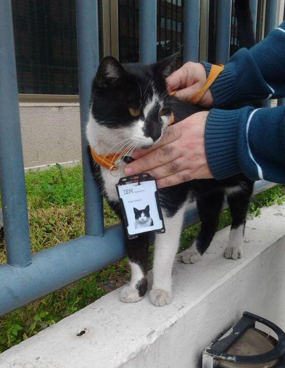 Apparently this cat spent so much time around #IBM offices it became an employee http://t.co/7oieHYDOEn