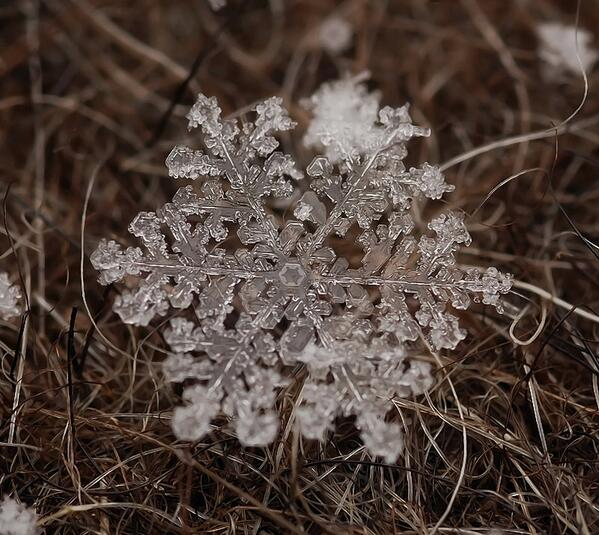 Macro Photo of an Individual Snowflake http://t.co/xELFUXqN04