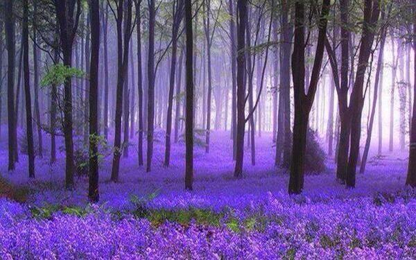 Black Forest, Germany. http://t.co/CqK3mpl5by