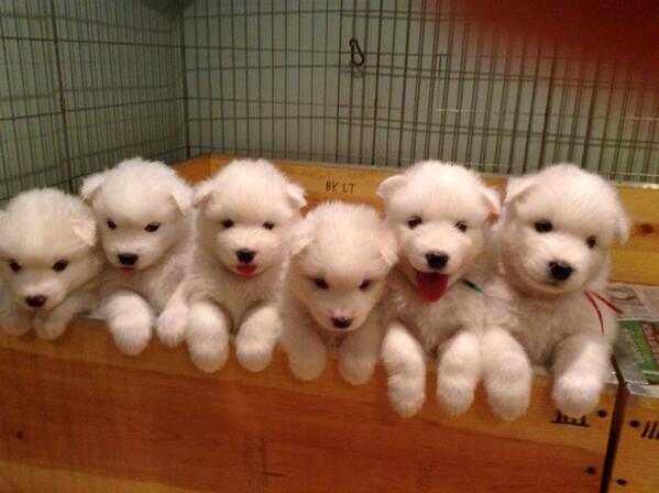 Looks like we've got all our puppies in a row. #newidioms http://t.co/e3hNVSbEZ8