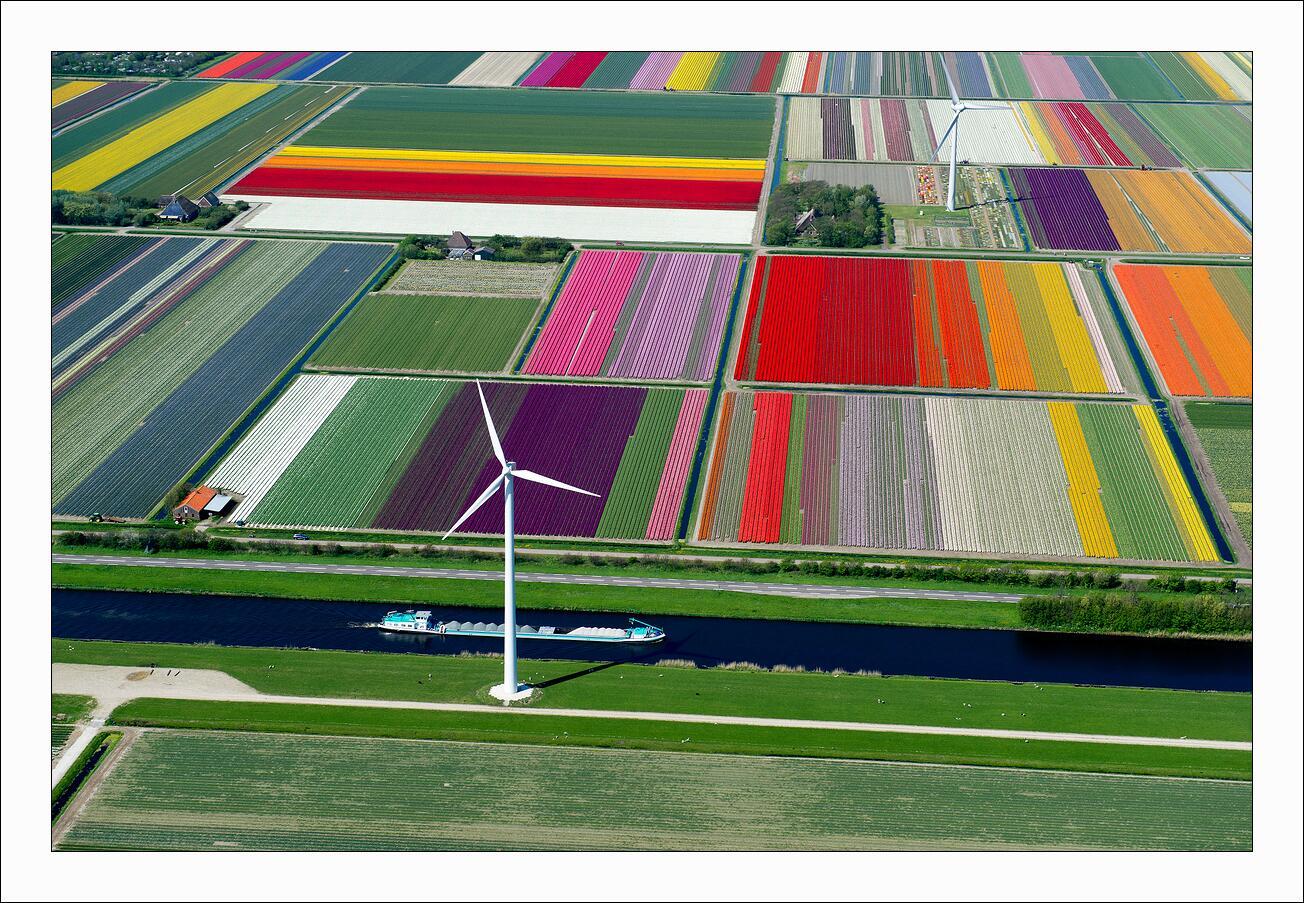 Tulip Fields in Bloom in late April. Hollands Kroon, Netherlands http://t.co/XSj6BR7zWZ