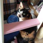 RT #緊急 #京都 #京田辺市 #里親募集 猫17匹@Helshione: ミミ♀3歳位 エイズキャリア持ち 人見知りが激しい。ご飯の時には近くに来て、名前を呼ぶと可愛く鳴いて見つめます。本当は撫でて欲しいhttps://t.co/tiwDSRZYLT #拡散希望 #里親 #猫