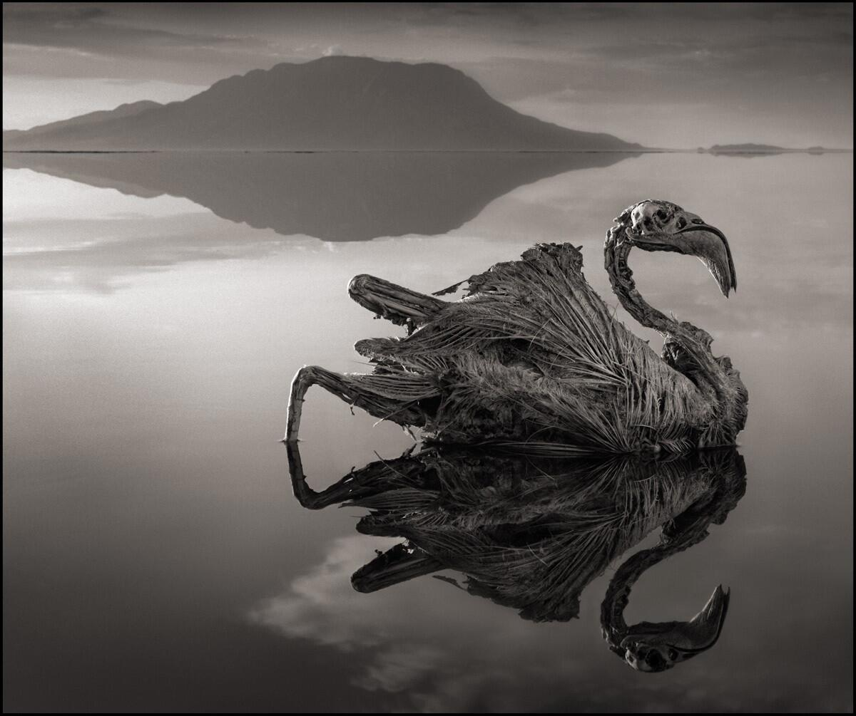 Bird turned to a statue on Lake Natron http://t.co/WFf9wwZwAb