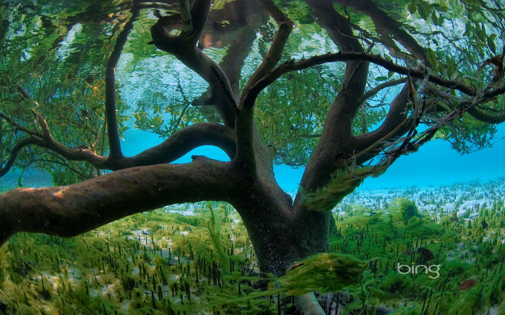 An Underwater Mangrove in Aldabra, Seychelles http://t.co/MhmUjbgpRC