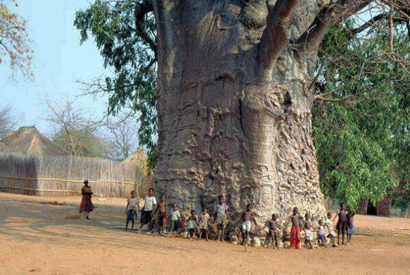 PHOTO: 2000 years old tree in South Africa, known as Tree of Life http://t.co/zb4Nkk0Ac1 - @Powerful_Pics