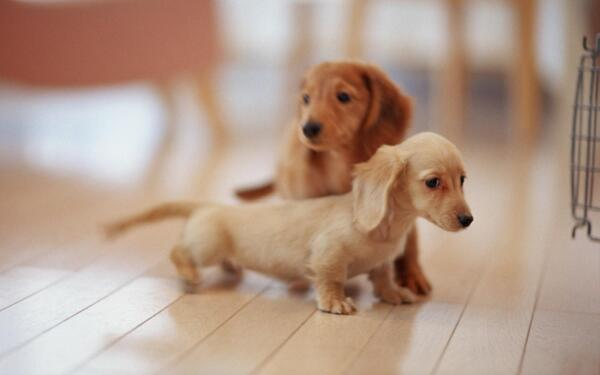Too cute http://t.co/a82MYtbLAj