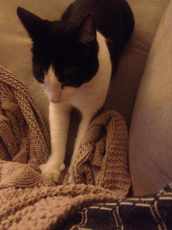 Nothing can come between a cat and his blanket. (He's been kneading for about 10 minutes now..) http://t.co/N8XEE2Mviv