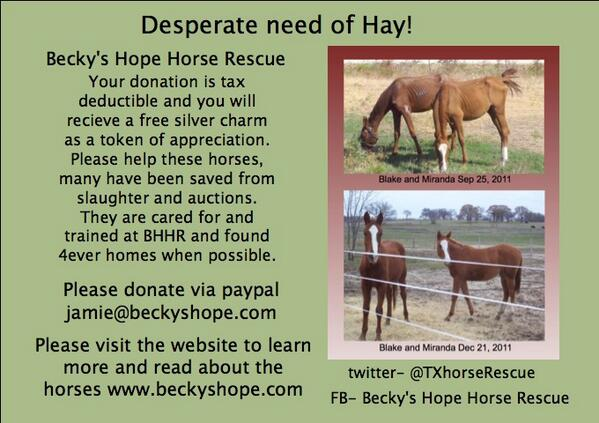 Pls help @TXHorseRescue  in desperate need of hay! Any and all donations appreciated. http://t.co/GRK0Y0PRkB  http://t.co/dsda5qyzR9 RT