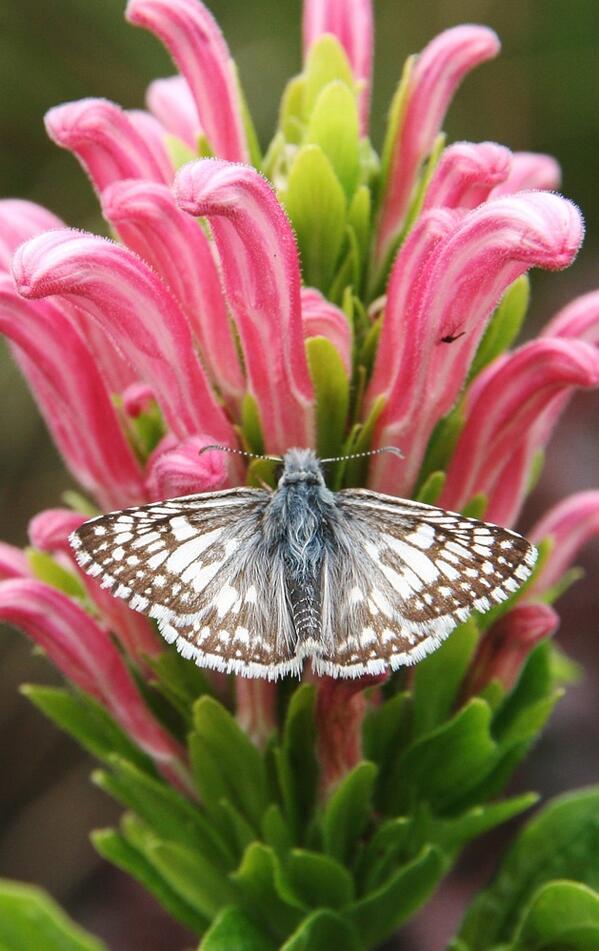 butterfly & flower #1 http://t.co/mkGIE38f7u