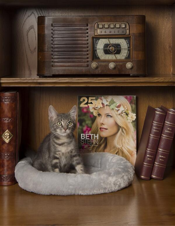 RT @BethStern: Foster kitten Sam w/ my new cover.  Both photos by Howard @animalleague http://t.co/McAzru7zQg