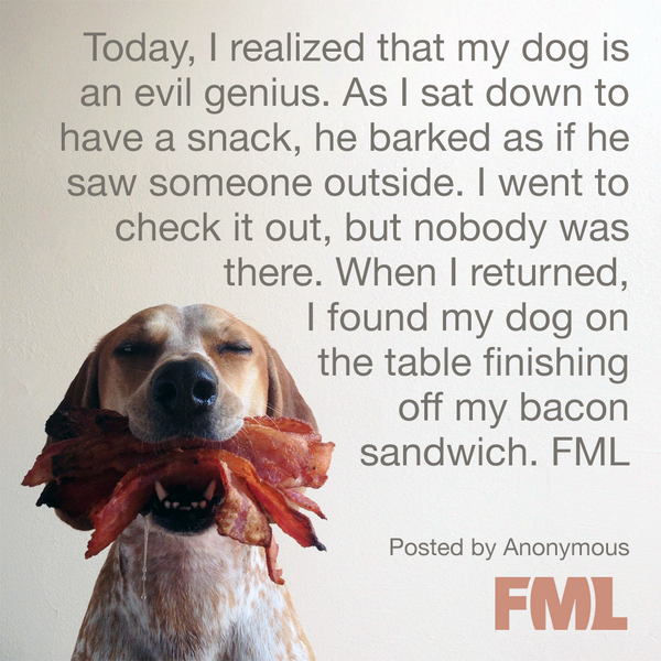 Dogs and bacon. What could go wrong? http://t.co/6eFhWh4Okj