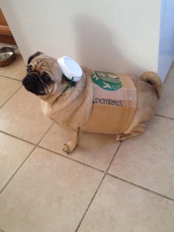 We'll never put sponsored ads on here, but we are experimenting with sponsored pugs from @starbucks #tweetapuppy http://t.co/j0P7pSSivf