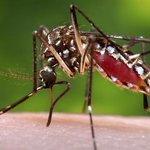 【デング熱】国内感染確認…渡航歴ない10代女性 http://t.co/uoTaXmevv3 熱帯・亜熱帯地域に生息する蚊が媒介する感染症。国内では70年近く、感染例の報告がなかった。女性は入院中だが、容体は安定している。 http://t.co/q9EVTrXxXR