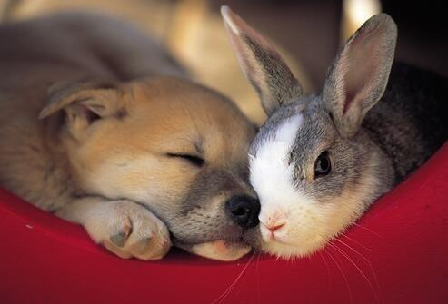 Bunny and puppy! http://t.co/hmuJleXm39