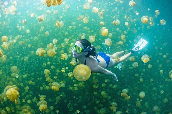 Swimming Through Jellyfish Lake in Palau http://t.co/tZnTadgqAf