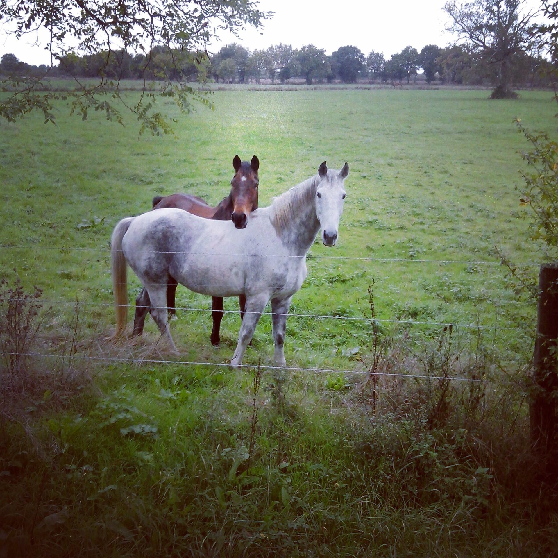 RT @Cronniers: @Equidia_news petite photo de Hildago et Galan ! Photo prise avec le sourire au lèvres. :) http://t.co/Lb4oNUemvA