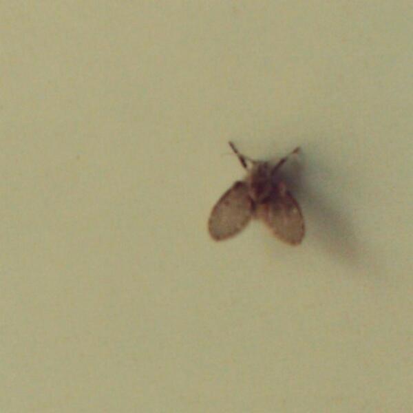 这种厕所里面一直都有的昆虫,叫啥呀? http://t.co/BsQY3PwoRU