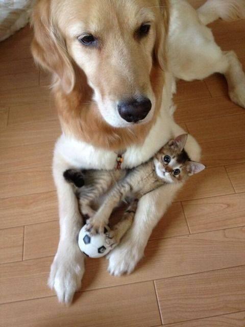 Kitten and puppy, cuddlin' http://t.co/MVz6gwA70E