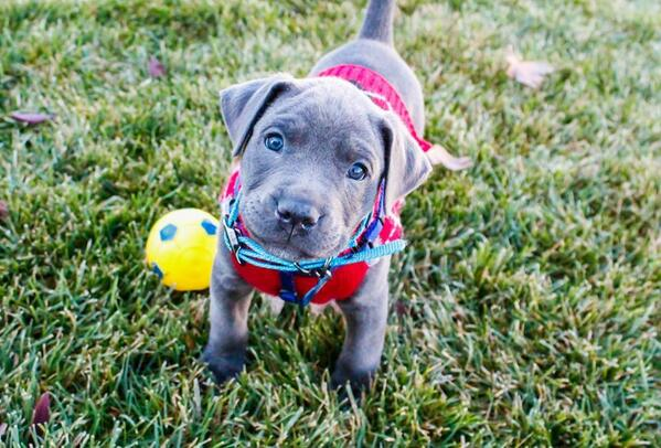 Puppy, in a park http://t.co/Yx9one74tf