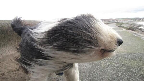 You know it's windy when... http://t.co/KqtW7mht7q