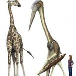 Meet Quetz, the giant reptilian stork that was as big as a giraffe. http://t.co/oaGfhFdcN8 http://t.co/KhiKZLS4zr