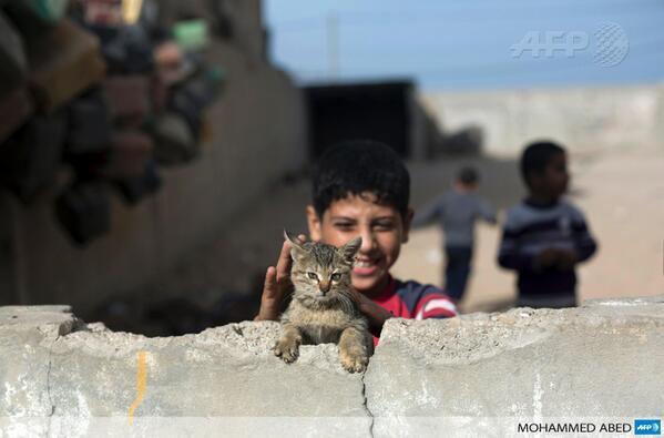 PHOTO - Un jeune Palestinien joue avec un chat dans une maison abandonnée à Gaza #AFP http://t.co/3wOTnIP9CT