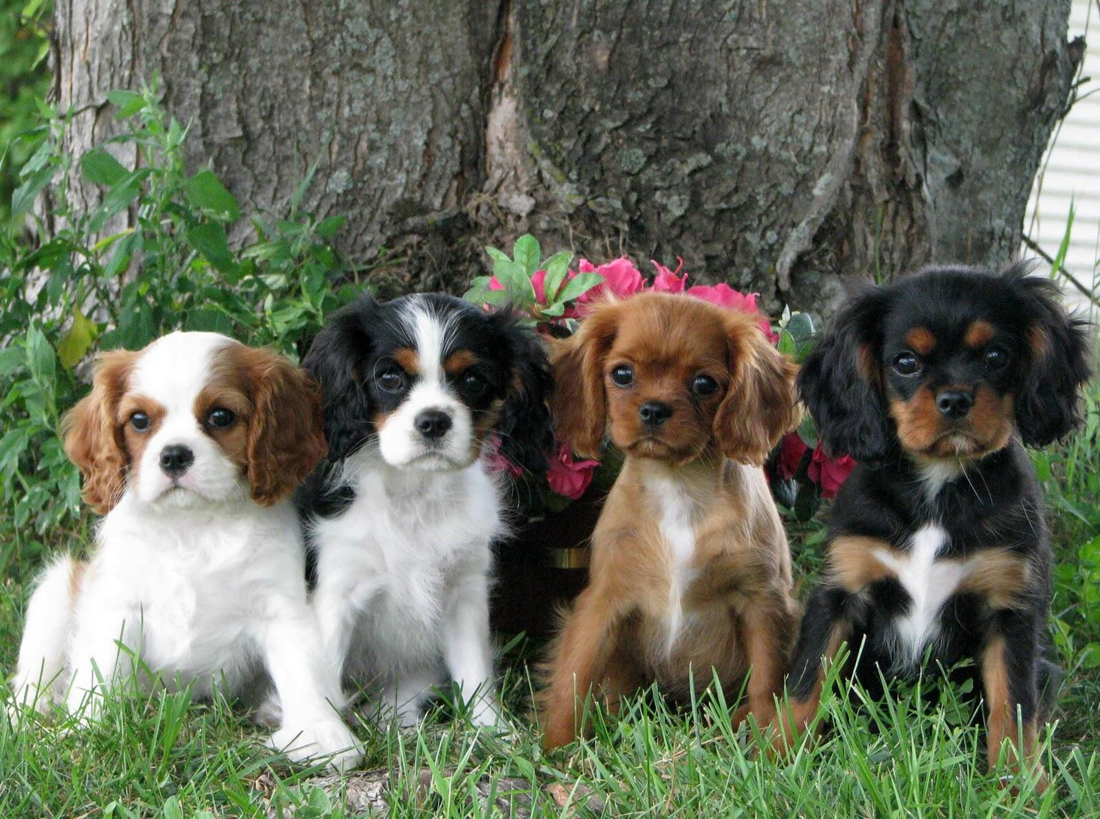 A line of spaniel pups sitting beneath a tree. http://t.co/JOXq6Imh3M