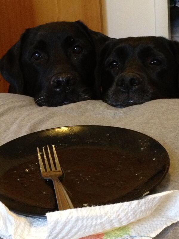 BOLOL!! RT @Alexbarkbadges: @iLoveDogsInc Optimistic, well-behaved...BEGGARS! #funnydogs #dogs #labs @dogs http://t.co/f2yFwSk1TD