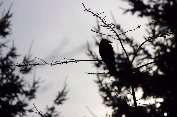 #crowtograph http://t.co/Le20ufWPQb