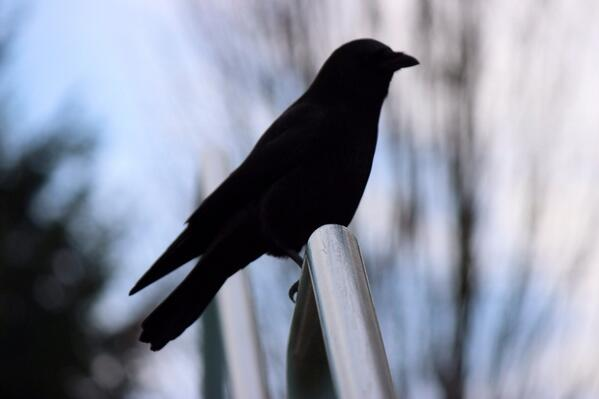 2 #crowtograph http://t.co/TVVGVu0wK0