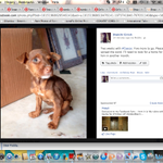 RT @ShakthiGalatta: Meet #Caesar. Needs a loving home for sweet li'l him in a month. Please help! @trishtrashers