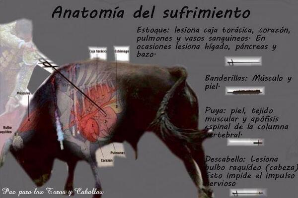 u_utrilla: anatomía del sufrimiento del toro. por esto y más decimos ...
