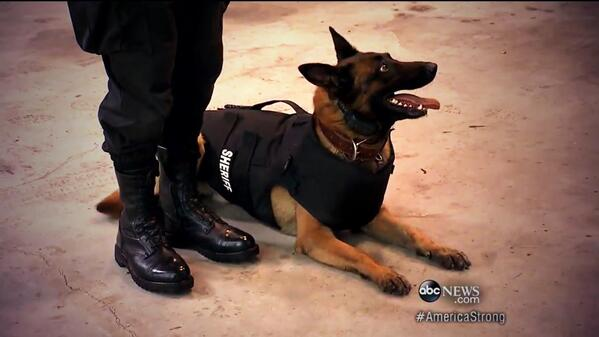 Gio Benitez (@GioBenitez): Love this. Bulletproof vests for some of the most vulnerable heroes: police K9s. @VIK9s #AmericaStrong #ABCWorldNews http://t.co/zX16JwkRtY