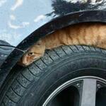 Empieza el frío y los gatos buscan refugio en los coches. No olvides dar unos golpes en el capó antes de arrancar. http://t.co/oCbFkXg2Hq