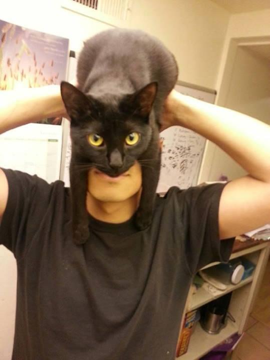 RT @Damientg: How to look like Batman, using your cat. http://t.co/eRmmQgcXe3